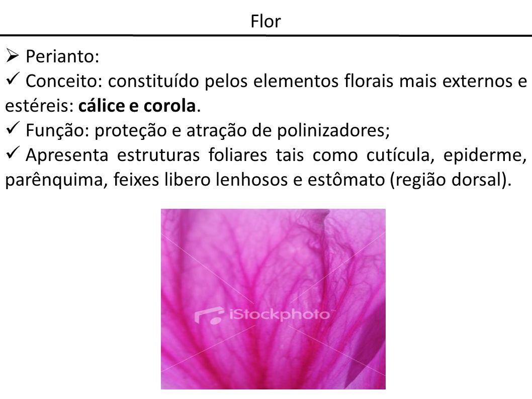 Flor Perianto: Conceito: constituído pelos elementos florais mais externos e estéreis: cálice e corola. Função: proteção e atração de polinizadores; A