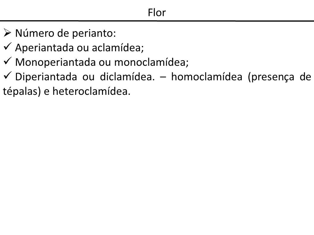Flor Número de perianto: Aperiantada ou aclamídea; Monoperiantada ou monoclamídea; Diperiantada ou diclamídea. – homoclamídea (presença de tépalas) e