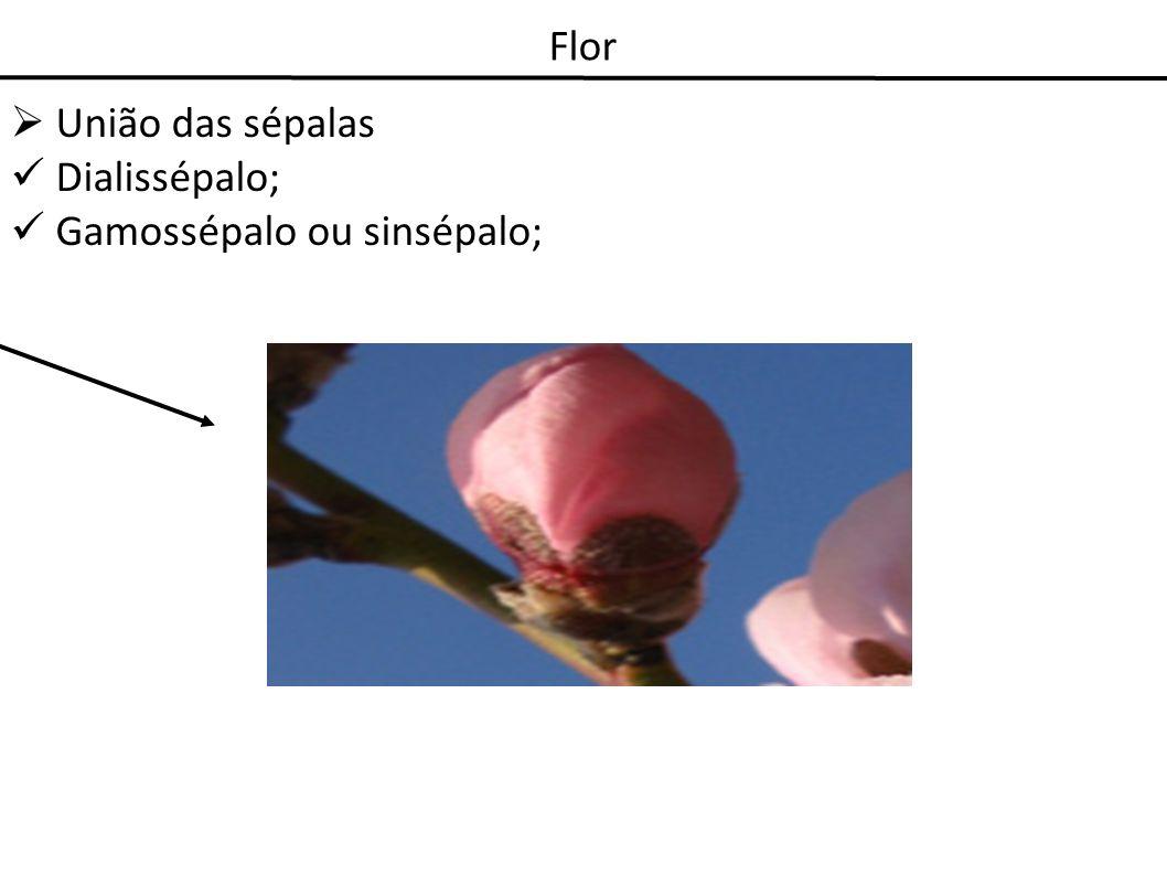 Flor União das sépalas Dialissépalo; Gamossépalo ou sinsépalo;