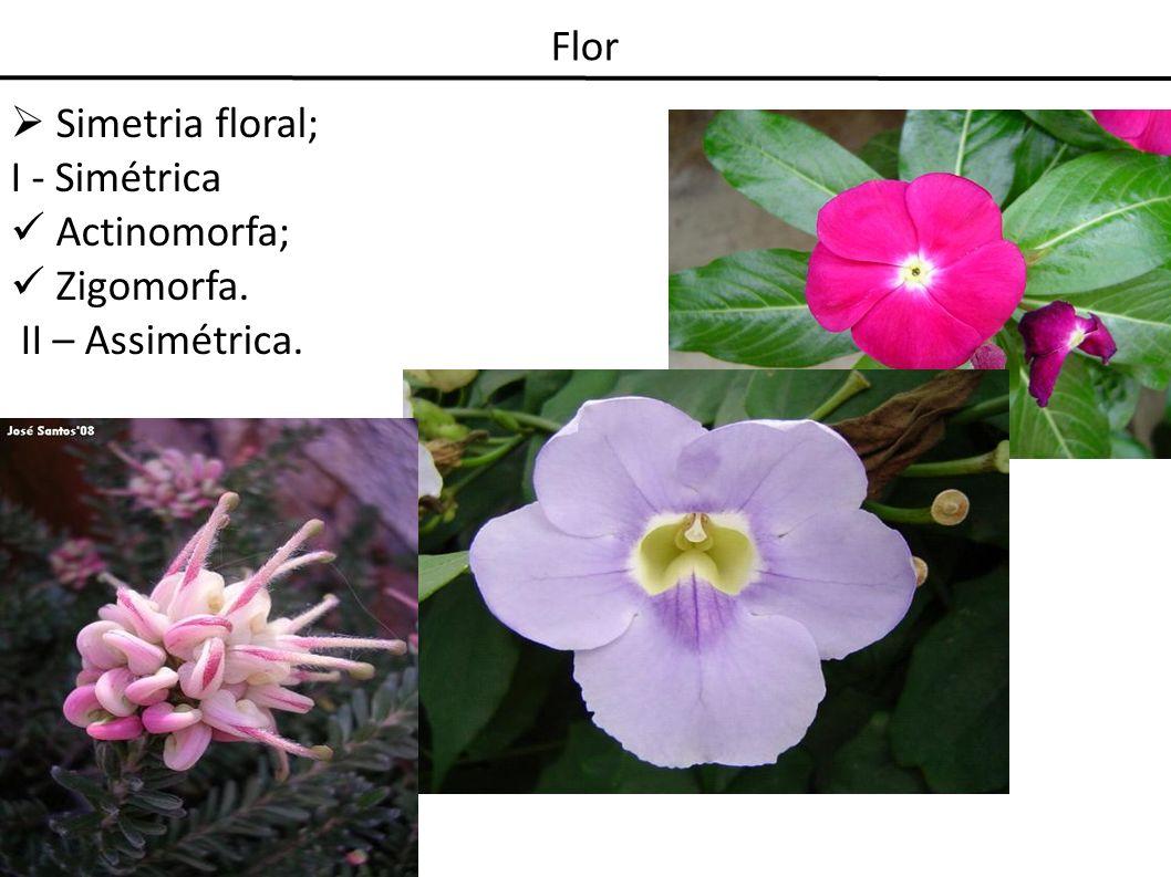 Flor Androceu: Conjunto de estames que se desenvolve internamente ao perianto; Reprodução sexuada masculina;