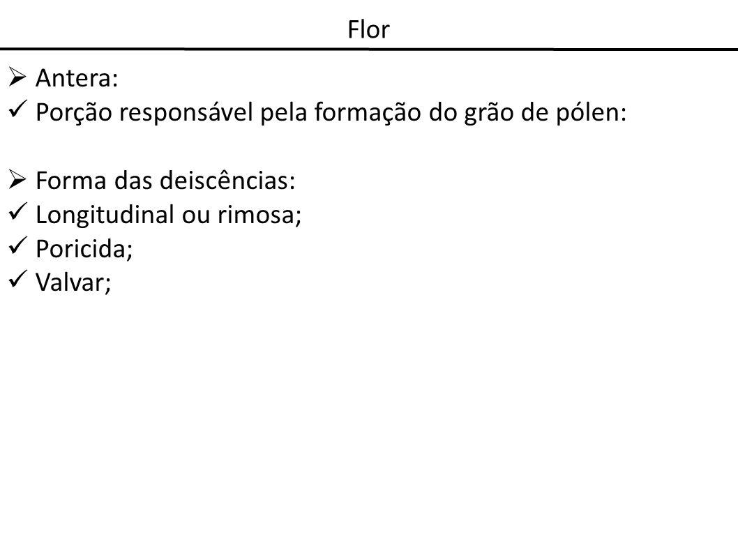 Flor Antera: Porção responsável pela formação do grão de pólen: Forma das deiscências: Longitudinal ou rimosa; Poricida; Valvar;