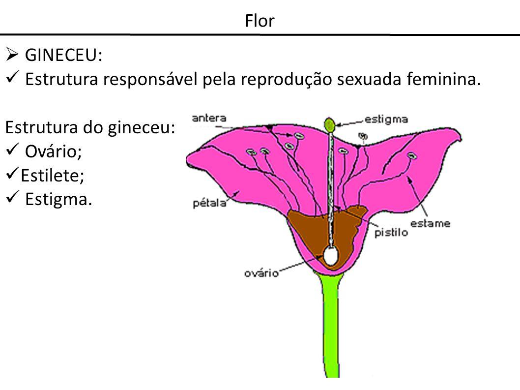 Flor GINECEU: Estrutura responsável pela reprodução sexuada feminina. Estrutura do gineceu: Ovário; Estilete; Estigma.
