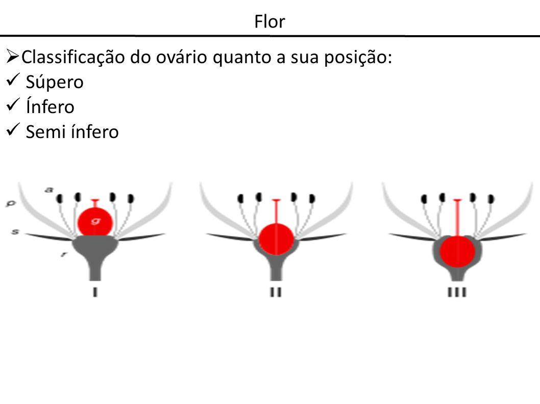 Flor Classificação do ovário quanto a sua posição: Súpero Ínfero Semi ínfero