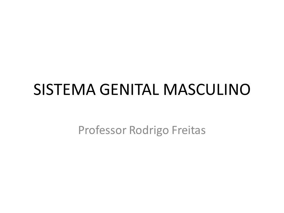 SISTEMA GENITAL MASCULINO ÓRGÃOS GÔNADAS (Testículos) VIAS CONDUTORAS DOS GAMETAS (Túbulos, ductos, epidídimo, ducto deferente, ducto ejaculatório e uretra) ÓRGÃO DE CÓPULA (PÊNIS) GLÂNDULAS ANEXAS (Vesículas seminais, próstata e glândulas bulbo-uretrais) ESTRUTURAS ERÉTEIS ÓRGÃOS GENITAIS EXTERNOS (Pênis e escroto)
