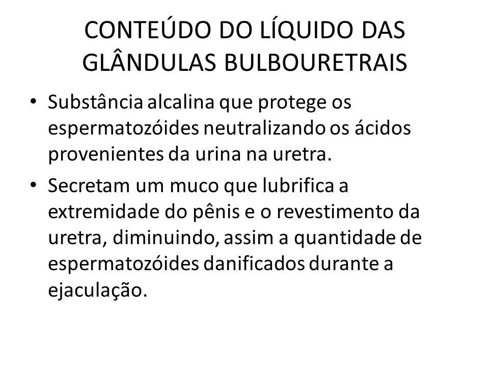 CONTEÚDO DO LÍQUIDO DAS GLÂNDULAS BULBOURETRAIS Substância alcalina que protege os espermatozóides neutralizando os ácidos provenientes da urina na ur