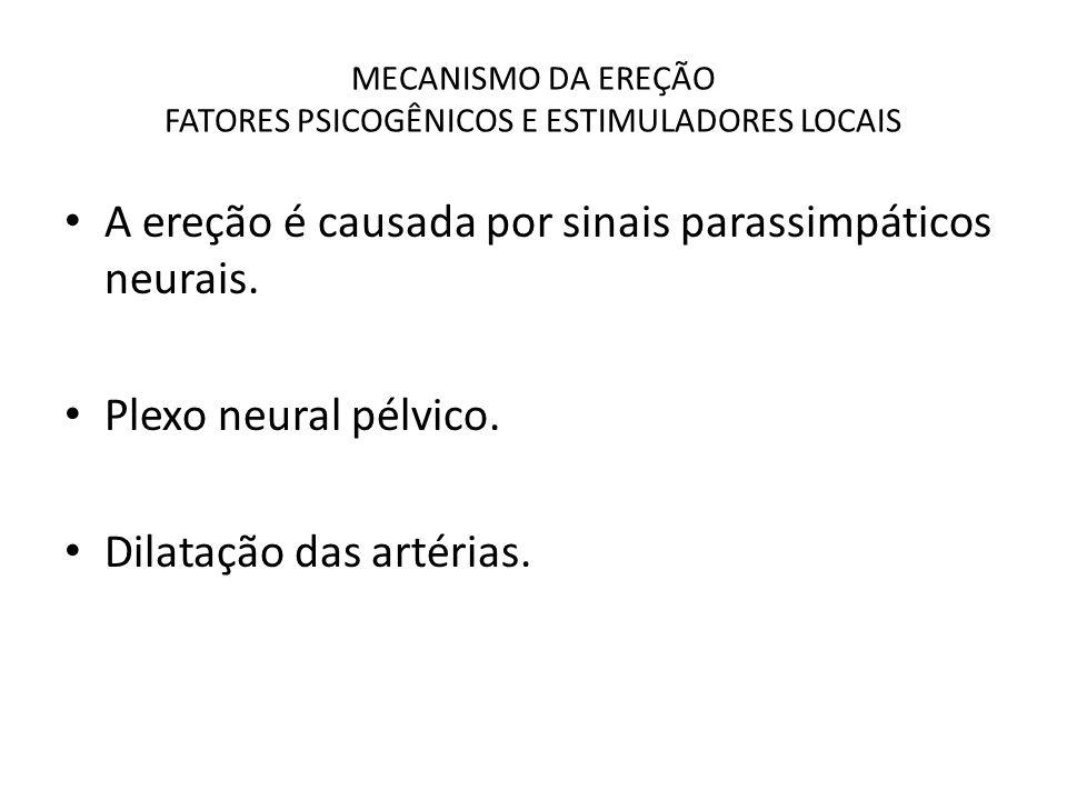 MECANISMO DA EREÇÃO FATORES PSICOGÊNICOS E ESTIMULADORES LOCAIS A ereção é causada por sinais parassimpáticos neurais. Plexo neural pélvico. Dilatação