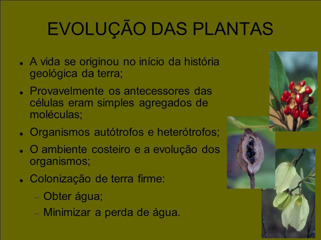 EVOLUÇÃO DAS PLANTAS A vida se originou no início da história geológica da terra; Provavelmente os antecessores das células eram simples agregados de