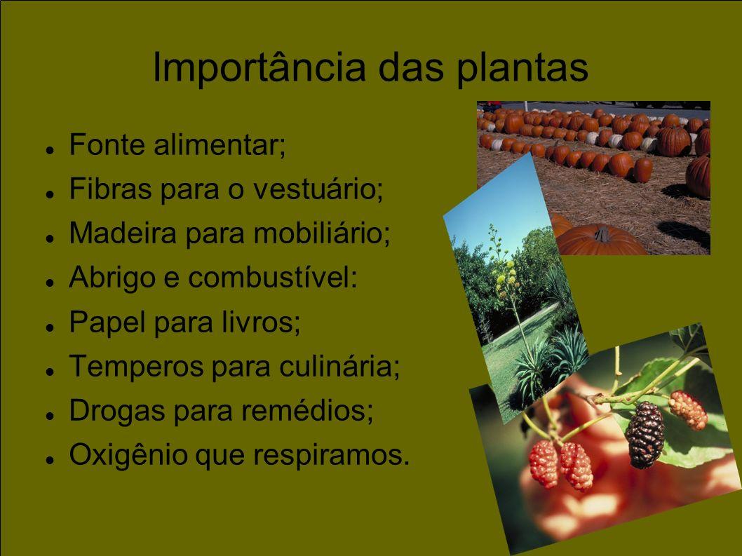 Importância das plantas Fonte alimentar; Fibras para o vestuário; Madeira para mobiliário; Abrigo e combustível: Papel para livros; Temperos para culi