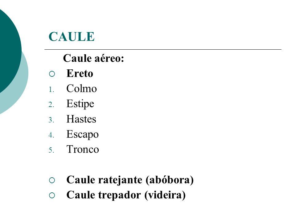 CAULE Caule aéreo: Ereto 1. Colmo 2. Estipe 3. Hastes 4. Escapo 5. Tronco Caule ratejante (abóbora) Caule trepador (videira)