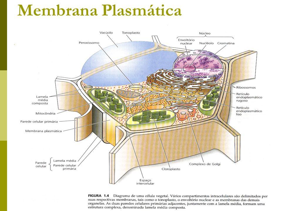 Prof. Lusia Morais Membrana Plasmática