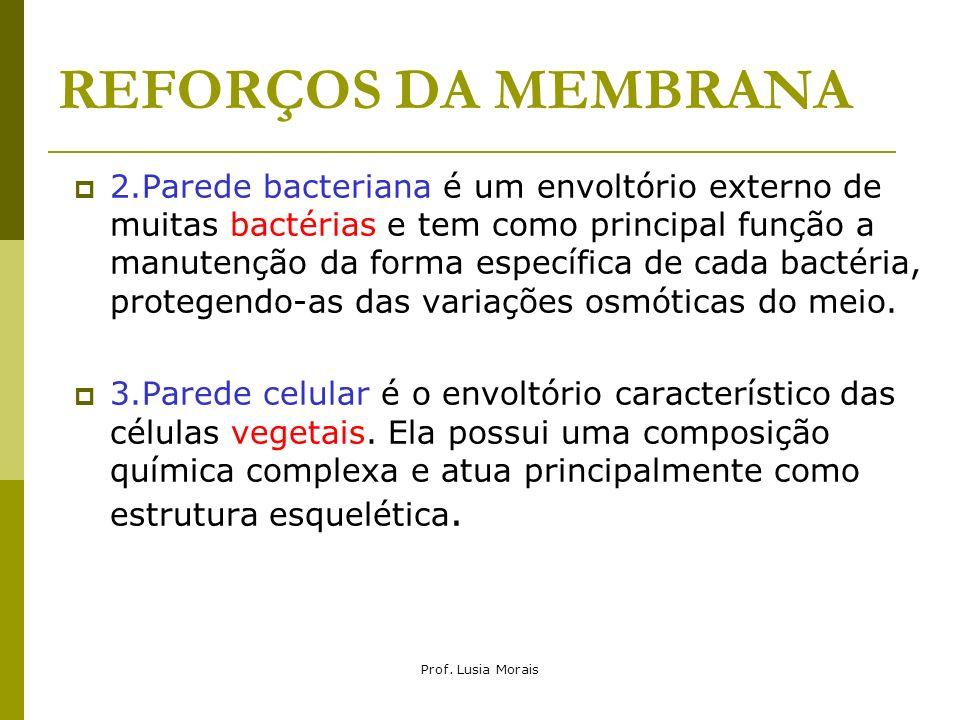 Prof. Lusia Morais REFORÇOS DA MEMBRANA 2.Parede bacteriana é um envoltório externo de muitas bactérias e tem como principal função a manutenção da fo