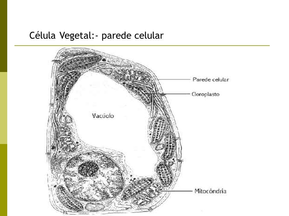 Prof. Lusia Morais Célula Vegetal:- parede celular