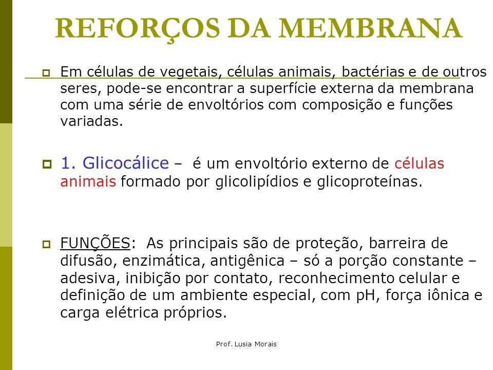 Prof. Lusia Morais REFORÇOS DA MEMBRANA Em células de vegetais, células animais, bactérias e de outros seres, pode-se encontrar a superfície externa d