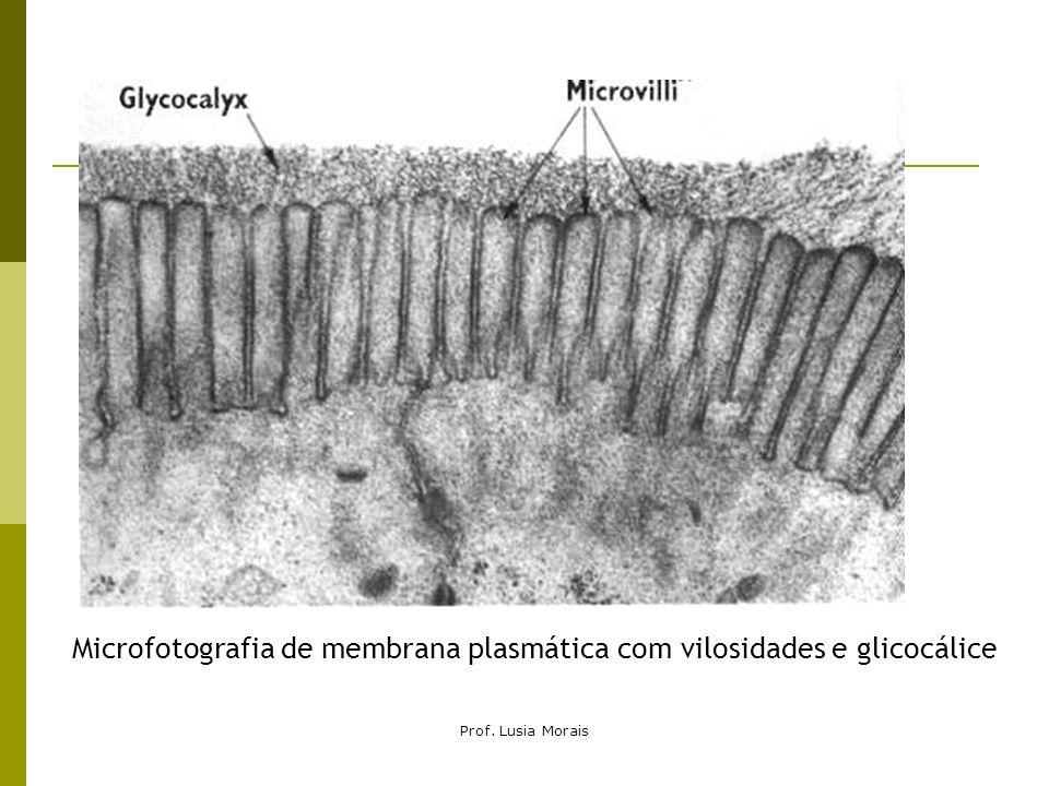 Prof. Lusia Morais Microfotografia de membrana plasmática com vilosidades e glicocálice