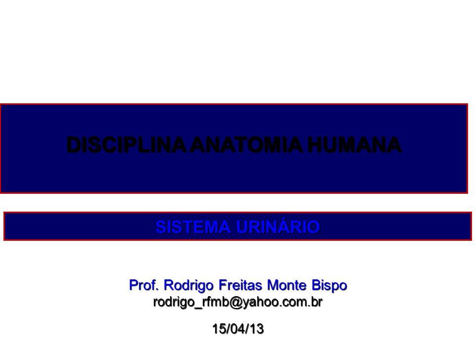 Prof. Rodrigo Freitas Monte Bispo rodrigo_rfmb@yahoo.com.br15/04/13 DISCIPLINA ANATOMIA HUMANA SISTEMA URINÁRIO