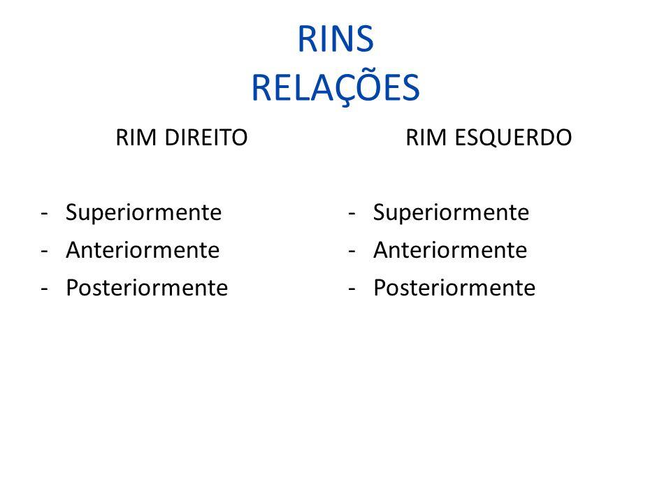 RINS RELAÇÕES RIM DIREITO -Superiormente -Anteriormente -Posteriormente RIM ESQUERDO -Superiormente -Anteriormente -Posteriormente