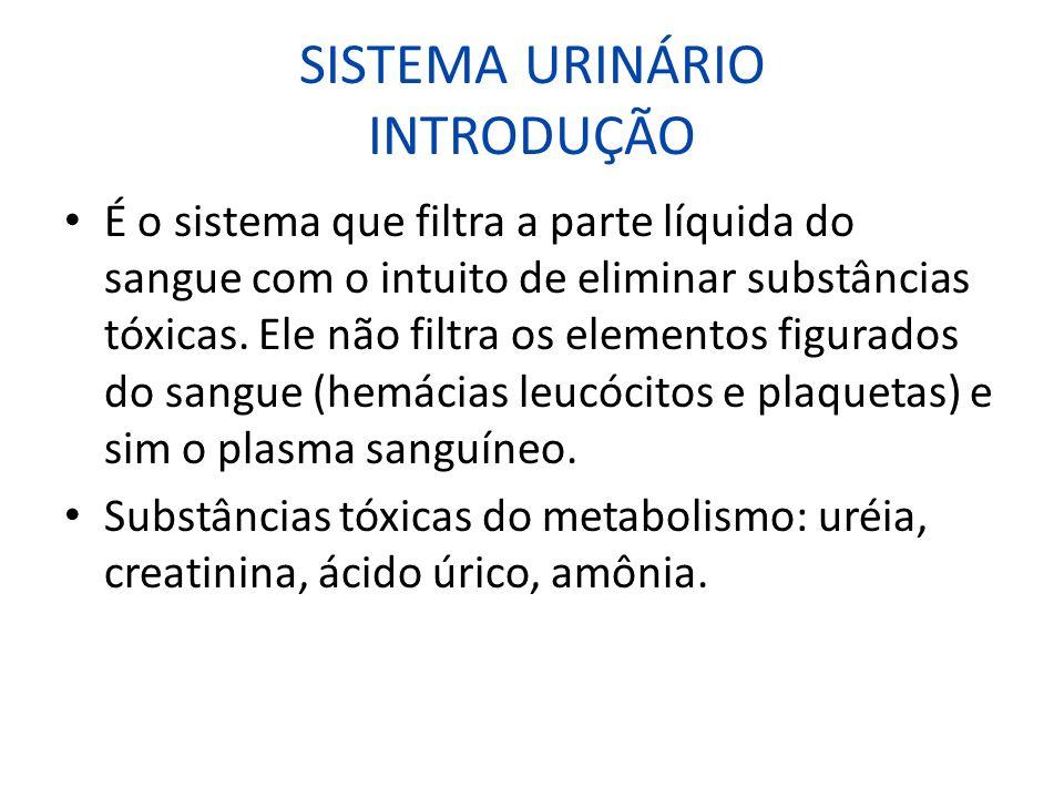 SISTEMA URINÁRIO INTRODUÇÃO É o sistema que filtra a parte líquida do sangue com o intuito de eliminar substâncias tóxicas. Ele não filtra os elemento