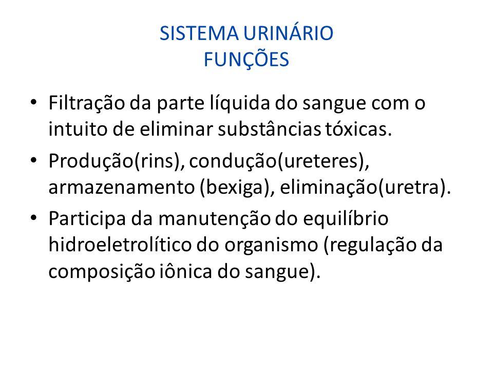 SISTEMA URINÁRIO FUNÇÕES Filtração da parte líquida do sangue com o intuito de eliminar substâncias tóxicas. Produção(rins), condução(ureteres), armaz