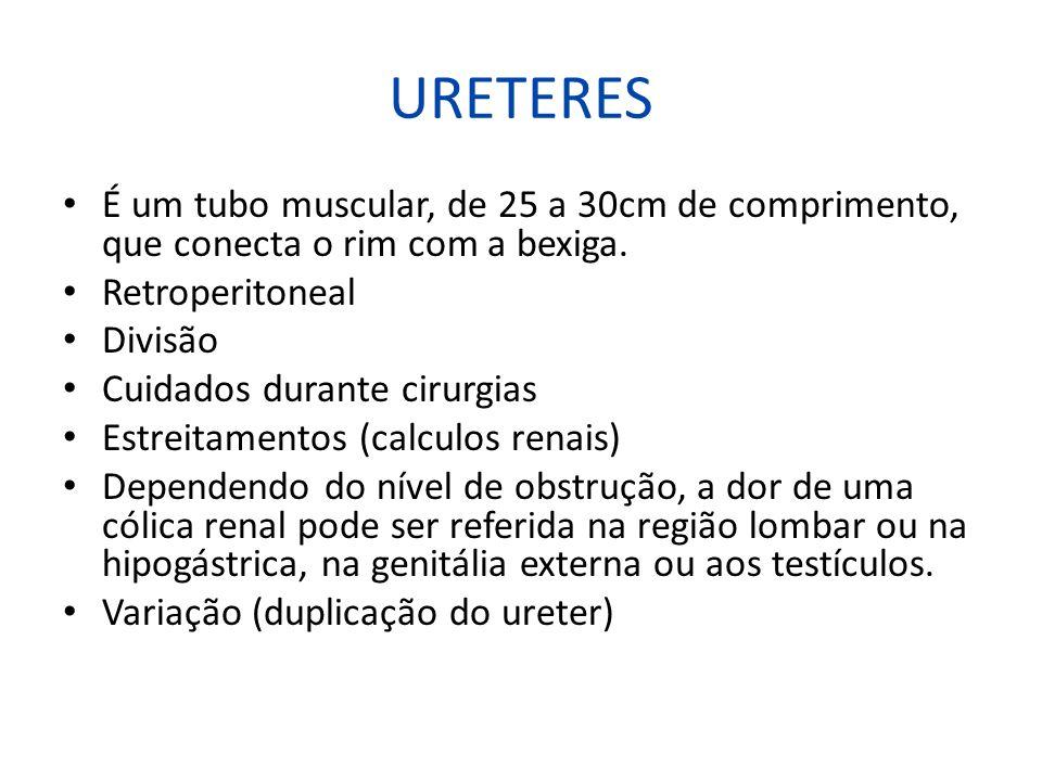 URETERES É um tubo muscular, de 25 a 30cm de comprimento, que conecta o rim com a bexiga. Retroperitoneal Divisão Cuidados durante cirurgias Estreitam