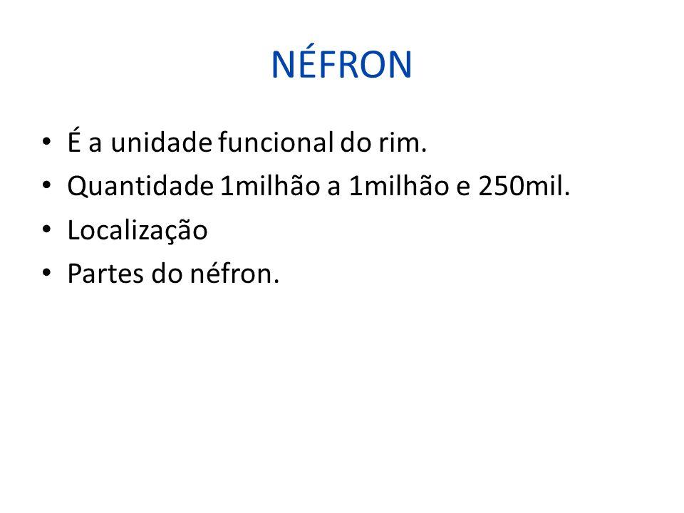 NÉFRON É a unidade funcional do rim. Quantidade 1milhão a 1milhão e 250mil. Localização Partes do néfron.