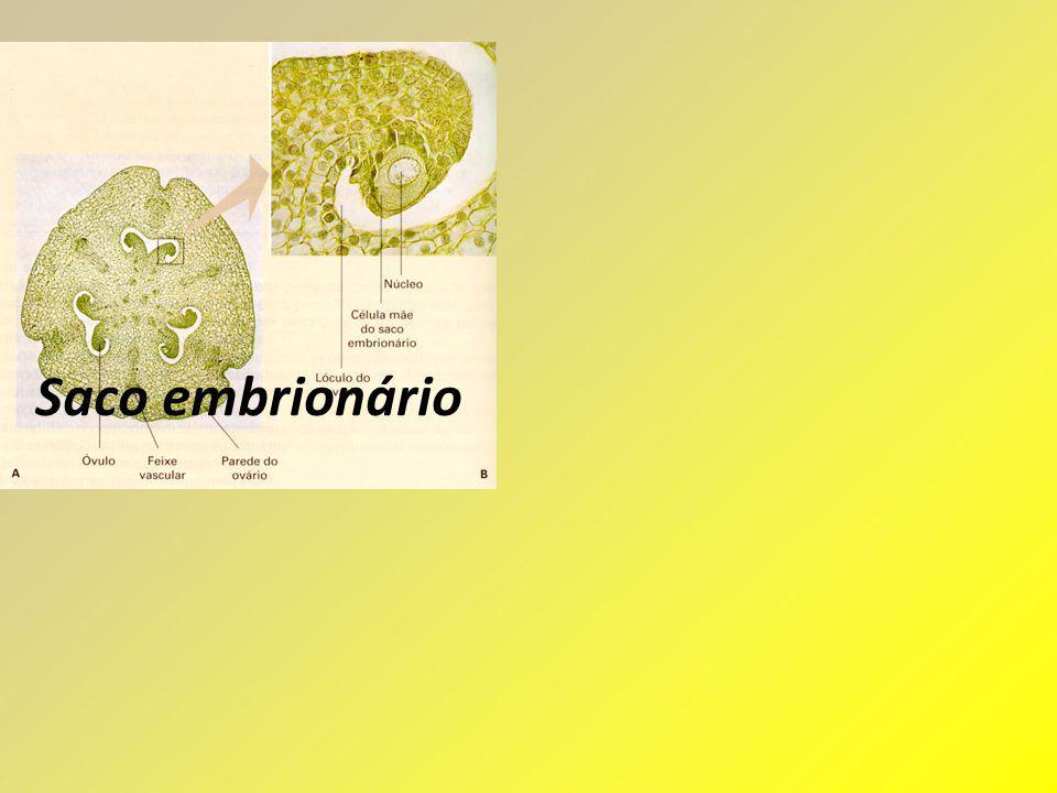 Saco embrionário