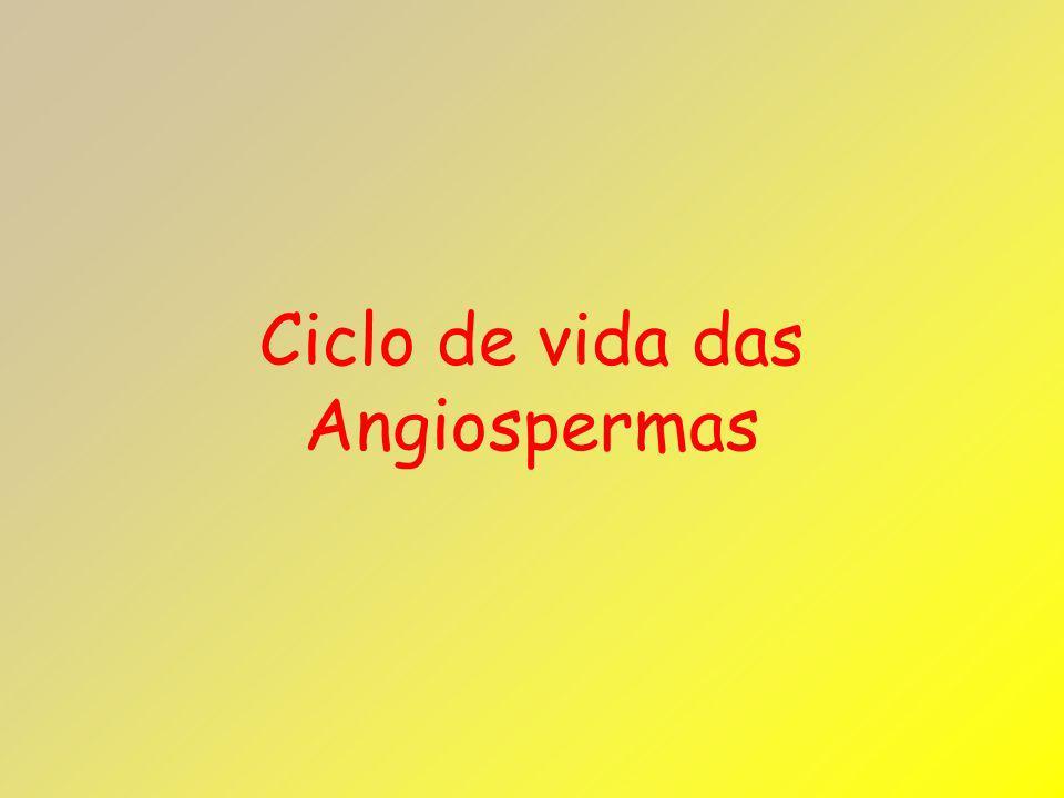 Ciclo de vida das Angiospermas