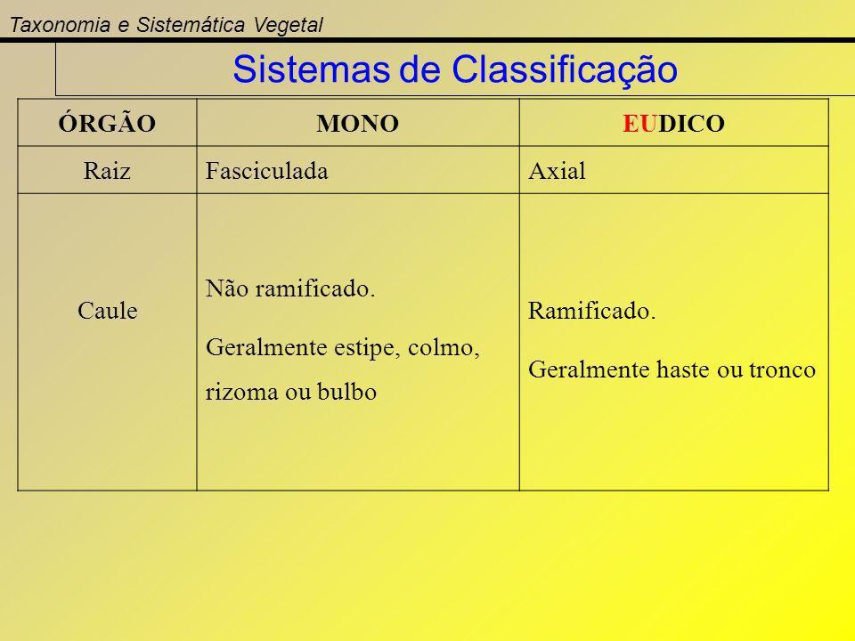 Taxonomia e Sistemática Vegetal Sistemas de Classificação ÓRGÃOMONOEUDICO RaizFasciculadaAxial Caule Não ramificado. Geralmente estipe, colmo, rizoma