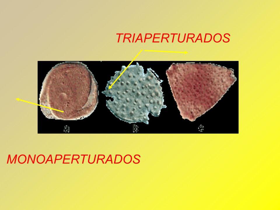 MONOAPERTURADOS TRIAPERTURADOS