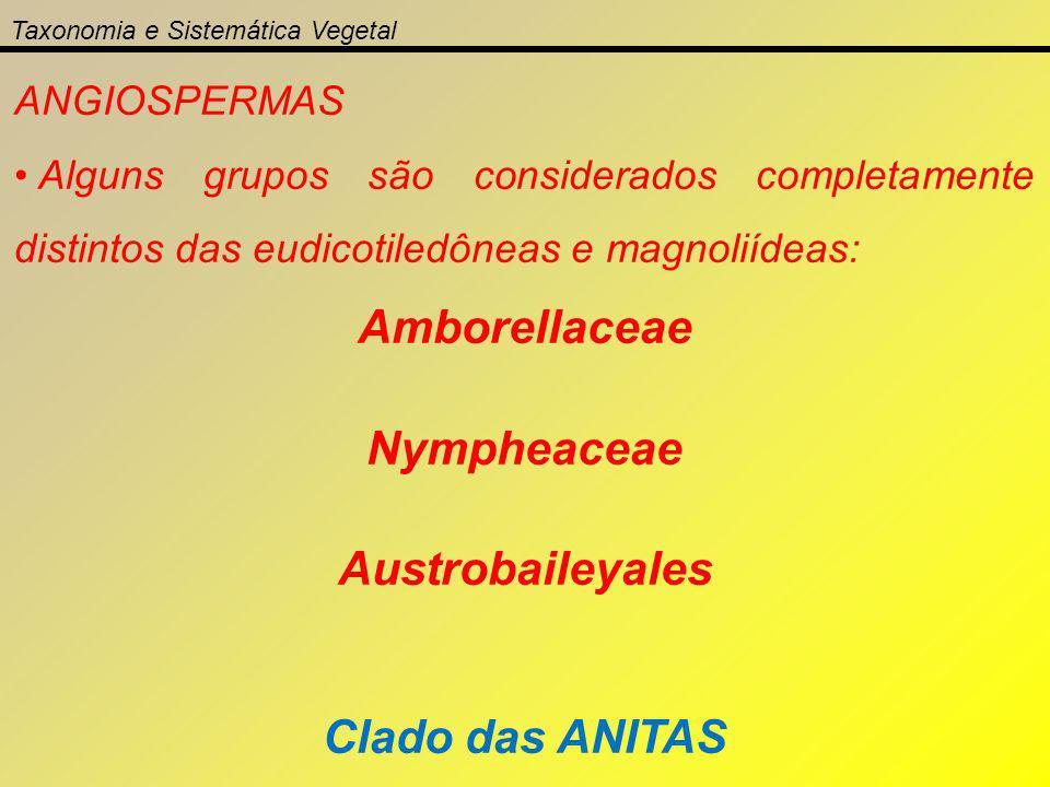 Taxonomia e Sistemática Vegetal ANGIOSPERMAS Alguns grupos são considerados completamente distintos das eudicotiledôneas e magnoliídeas: Amborellaceae