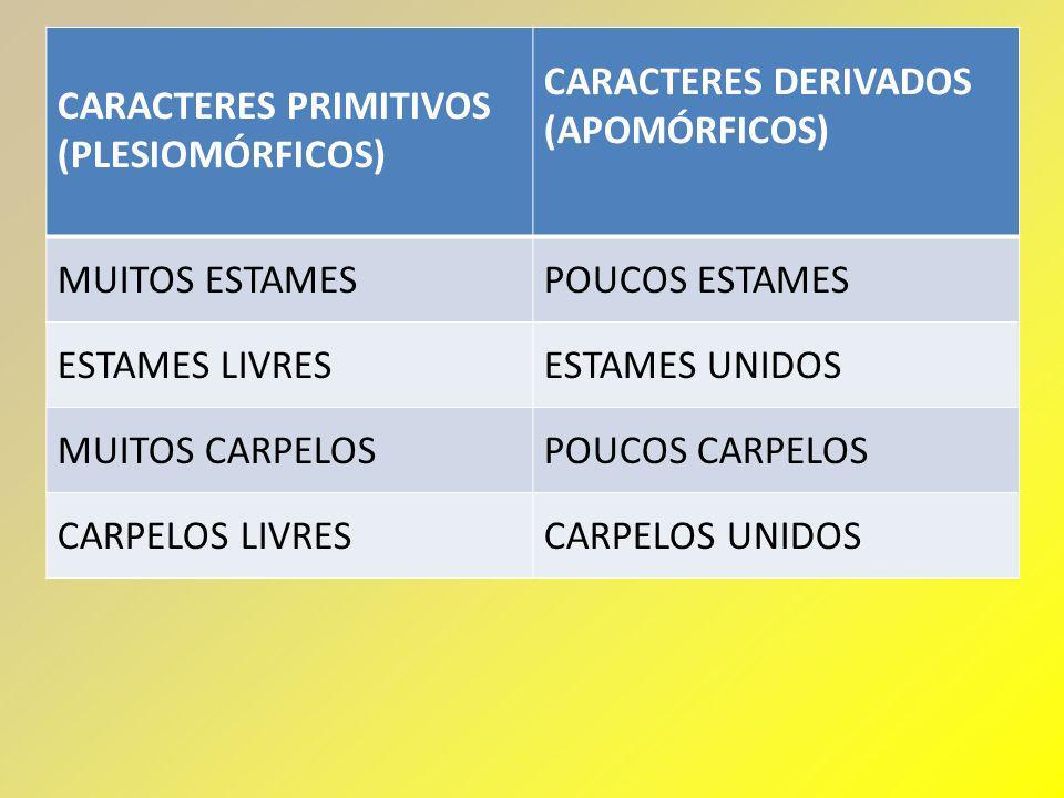 CARACTERES PRIMITIVOS (PLESIOMÓRFICOS) CARACTERES DERIVADOS (APOMÓRFICOS) MUITOS ESTAMESPOUCOS ESTAMES ESTAMES LIVRESESTAMES UNIDOS MUITOS CARPELOSPOU