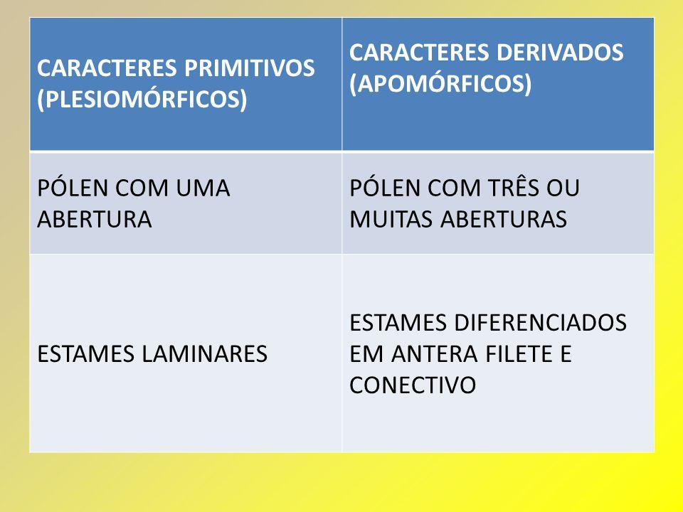 CARACTERES PRIMITIVOS (PLESIOMÓRFICOS) CARACTERES DERIVADOS (APOMÓRFICOS) PÓLEN COM UMA ABERTURA PÓLEN COM TRÊS OU MUITAS ABERTURAS ESTAMES LAMINARES