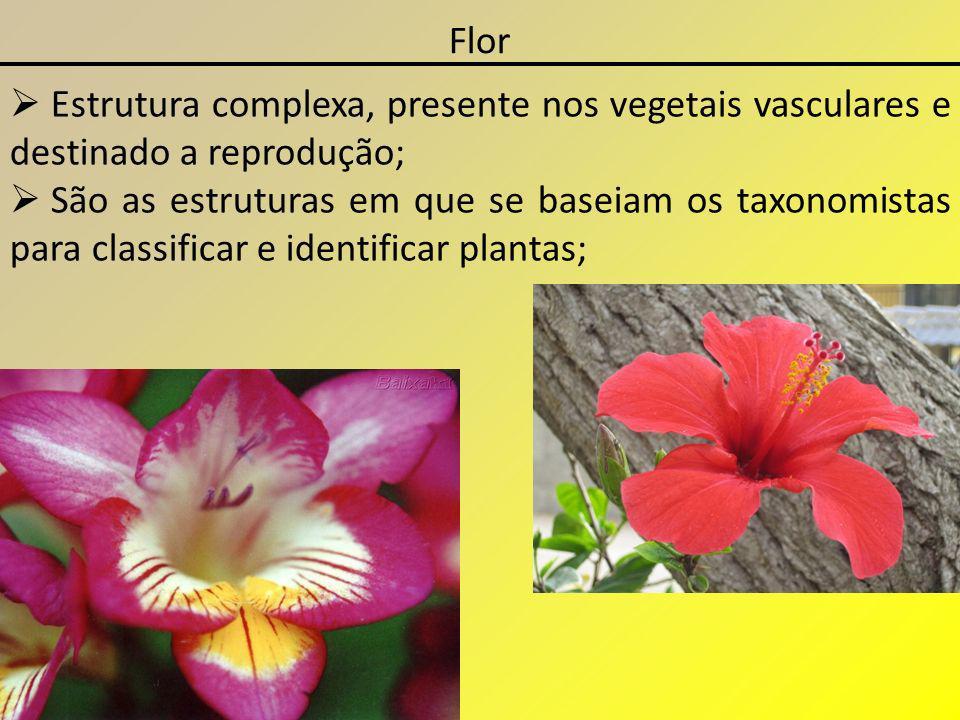Flor Estrutura complexa, presente nos vegetais vasculares e destinado a reprodução; São as estruturas em que se baseiam os taxonomistas para classific