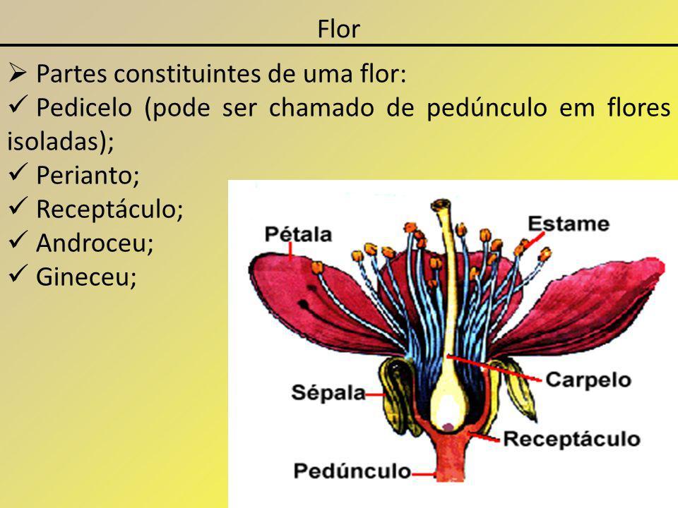 Flor Partes constituintes de uma flor: Pedicelo (pode ser chamado de pedúnculo em flores isoladas); Perianto; Receptáculo; Androceu; Gineceu;