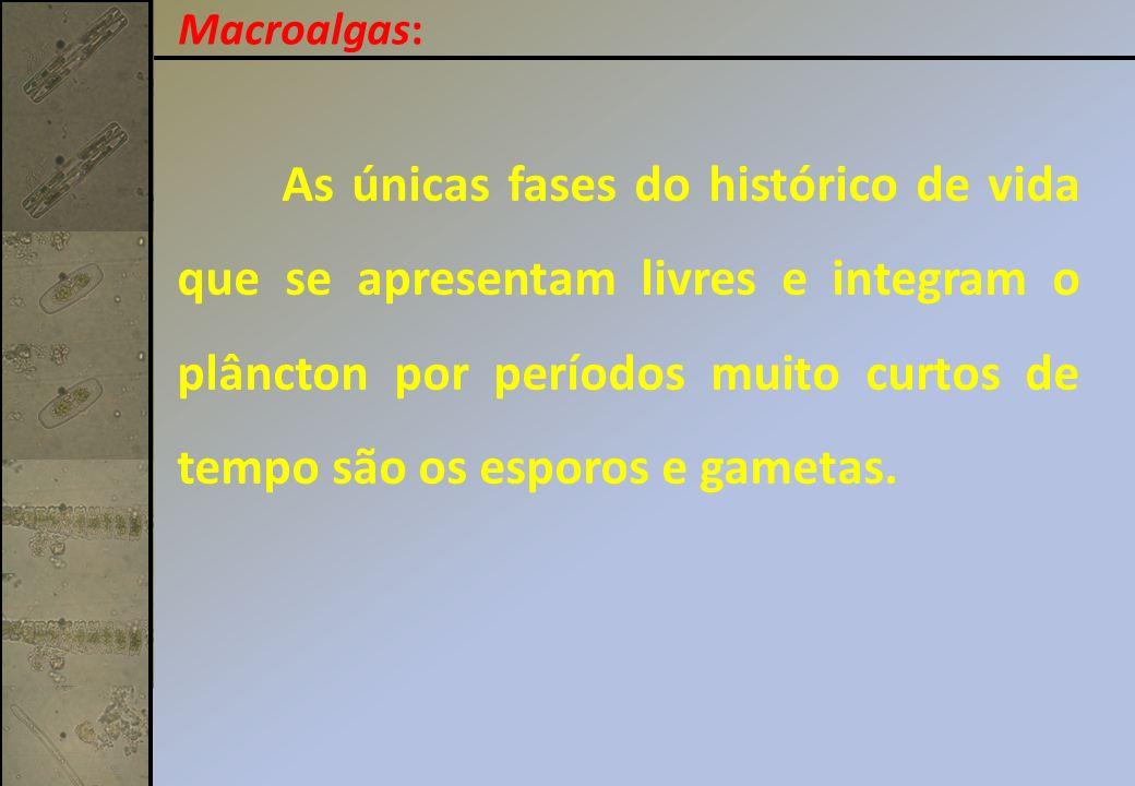 Carpogônio – gameta feminino que se origina do mesmo gametófito que produz espermatângios.