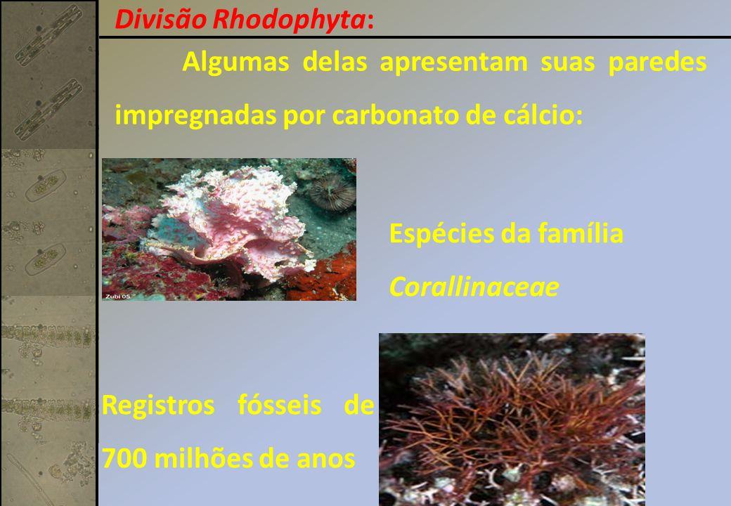 Algumas delas apresentam suas paredes impregnadas por carbonato de cálcio: Espécies da família Corallinaceae Registros fósseis de 700 milhões de anos