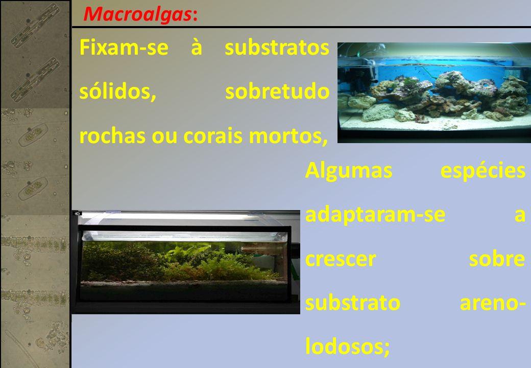 Fixam-se à substratos sólidos, sobretudo rochas ou corais mortos, Algumas espécies adaptaram-se a crescer sobre substrato areno- lodosos; Macroalgas:
