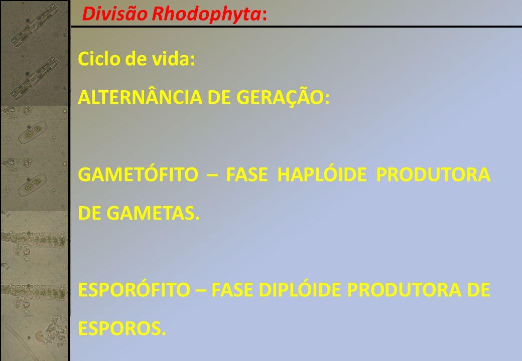 Ciclo de vida: ALTERNÂNCIA DE GERAÇÃO: GAMETÓFITO – FASE HAPLÓIDE PRODUTORA DE GAMETAS. ESPORÓFITO – FASE DIPLÓIDE PRODUTORA DE ESPOROS. Divisão Rhodo