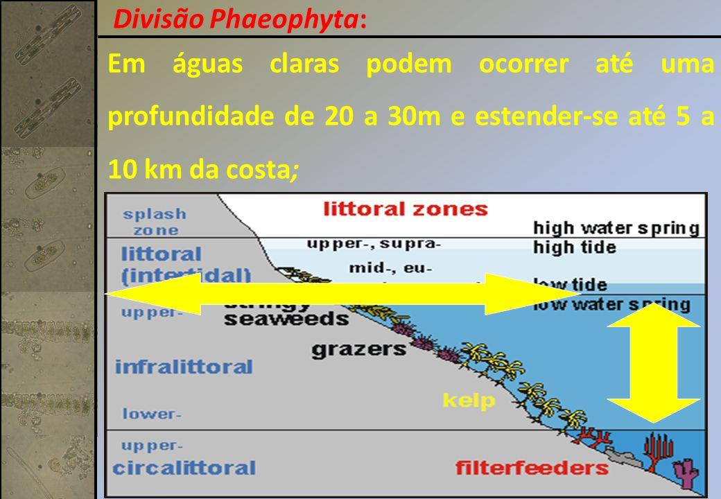 Em águas claras podem ocorrer até uma profundidade de 20 a 30m e estender-se até 5 a 10 km da costa; Divisão Phaeophyta: