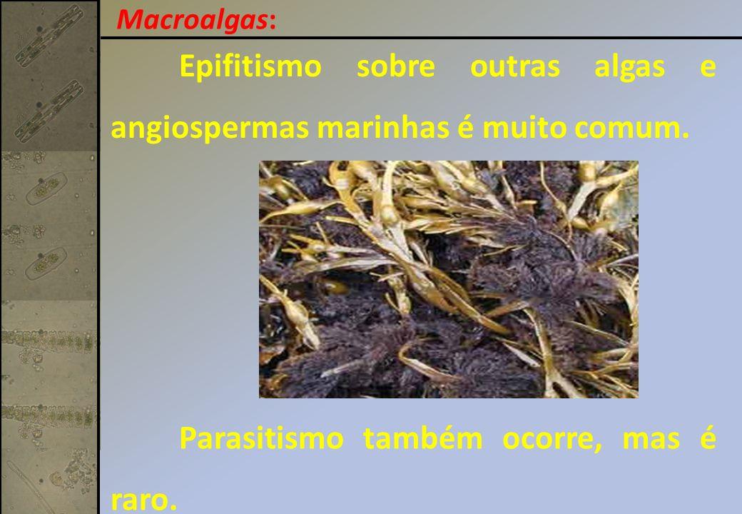 As áreas mais ricas em macroalgas, em diversidade biomassa são: Fundos rochosos e áreas recifais.