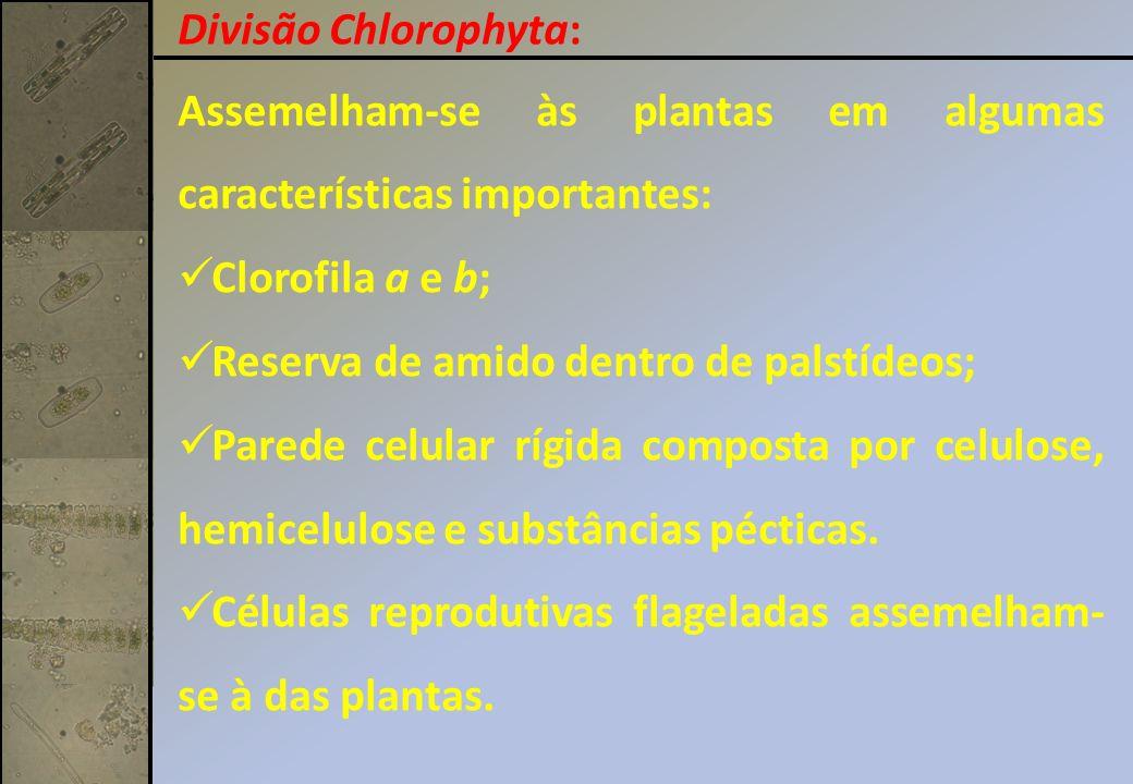 Assemelham-se às plantas em algumas características importantes: Clorofila a e b; Reserva de amido dentro de palstídeos; Parede celular rígida compost
