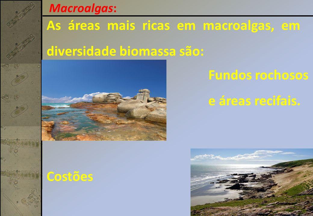 As áreas mais ricas em macroalgas, em diversidade biomassa são: Fundos rochosos e áreas recifais. Costões Macroalgas: