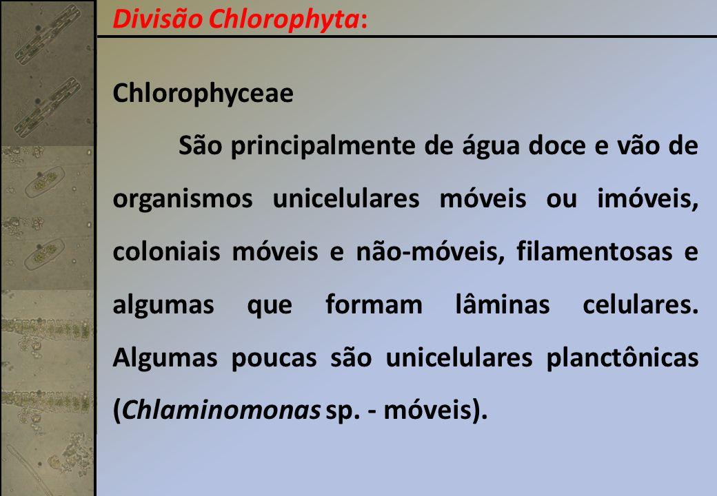 Chlorophyceae São principalmente de água doce e vão de organismos unicelulares móveis ou imóveis, coloniais móveis e não-móveis, filamentosas e alguma