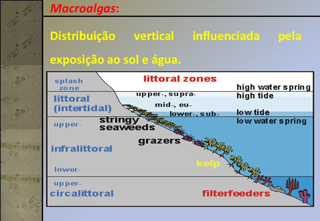 Distribuição vertical influenciada pela exposição ao sol e água. Macroalgas: