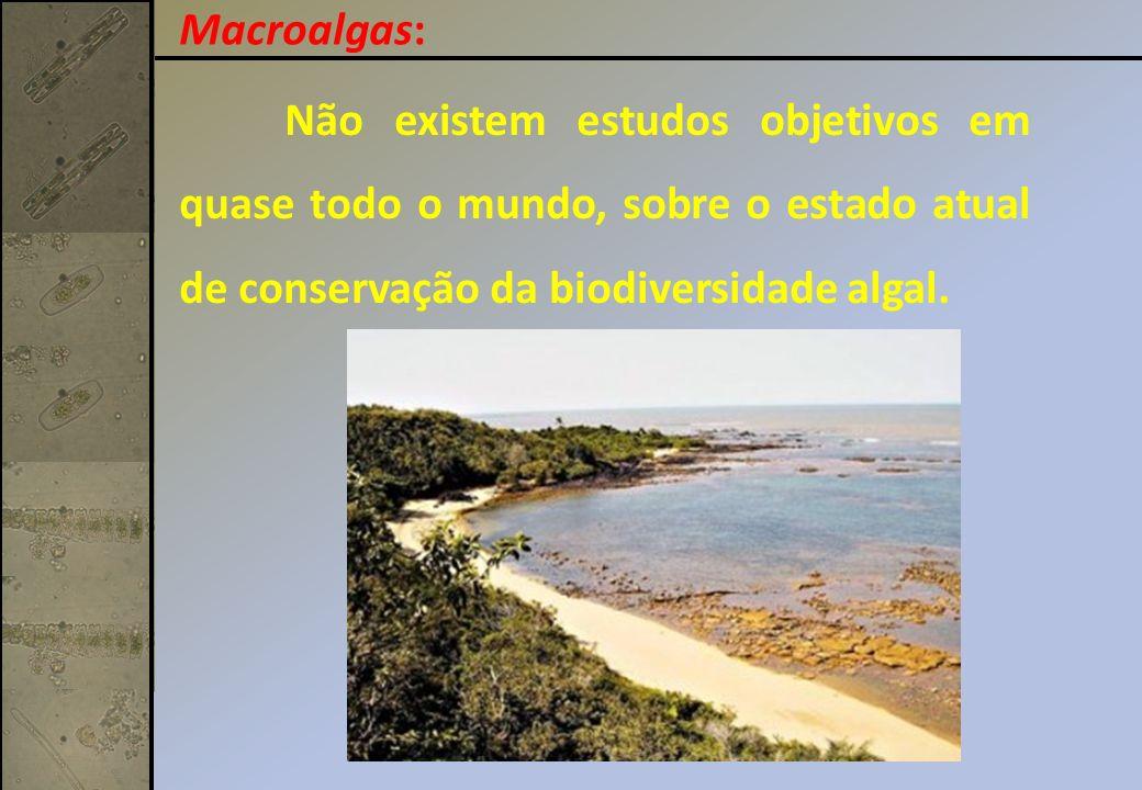 Não existem estudos objetivos em quase todo o mundo, sobre o estado atual de conservação da biodiversidade algal. Macroalgas: