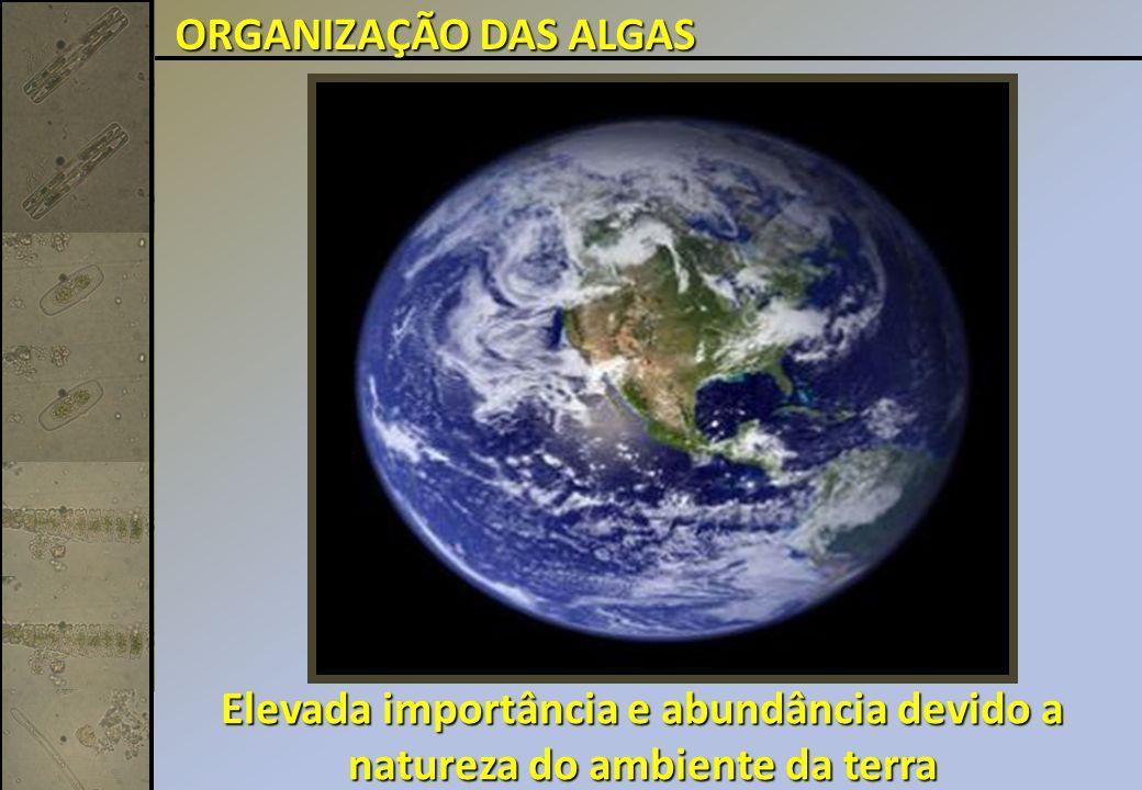 Elevada importância e abundância devido a natureza do ambiente da terra ORGANIZAÇÃO DAS ALGAS