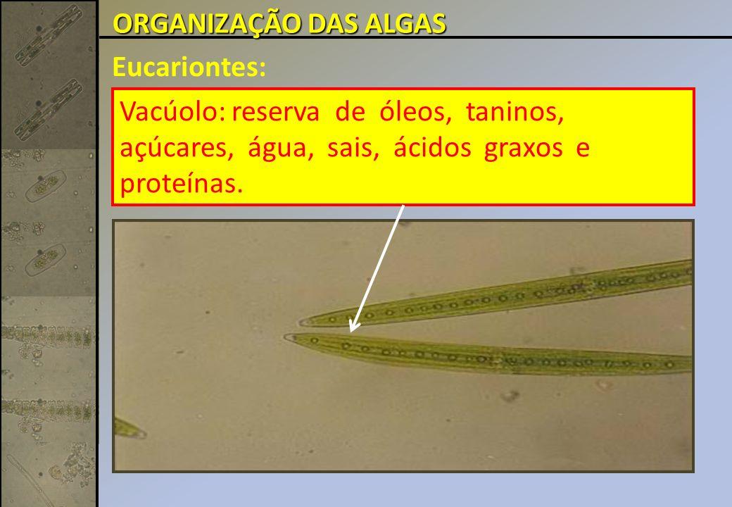 Eucariontes: Vacúolo: reserva de óleos, taninos, açúcares, água, sais, ácidos graxos e proteínas.