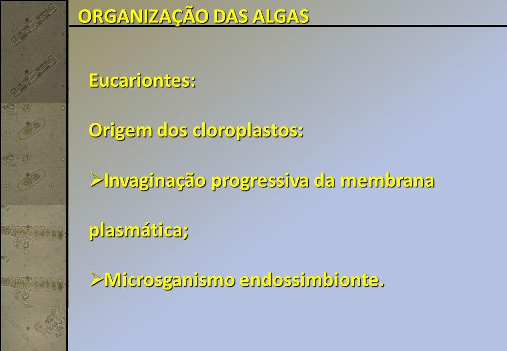 Eucariontes: Origem dos cloroplastos: Invaginação progressiva da membrana plasmática; Invaginação progressiva da membrana plasmática; Microsganismo endossimbionte.