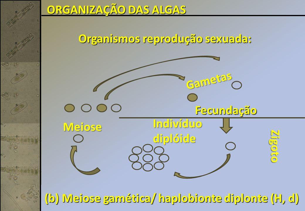Organismos reprodução sexuada: Fecundação (b) Meiose gamética/ haplobionte diplonte (H, d) Indivíduodiplóide Meiose Zigoto Gametas ORGANIZAÇÃO DAS ALGAS