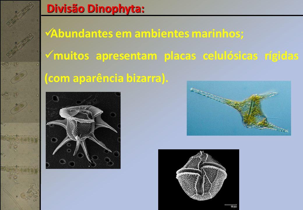 Abundantes em ambientes marinhos; muitos apresentam placas celulósicas rígidas (com aparência bizarra).