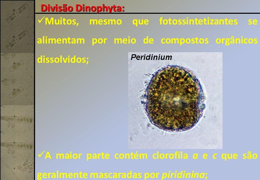 Muitos, mesmo que fotossintetizantes se alimentam por meio de compostos orgânicos dissolvidos; A maior parte contém clorofila a e c que são geralmente mascaradas por piridinina; Divisão Dinophyta: